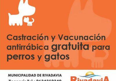 castracion_vacunacion18