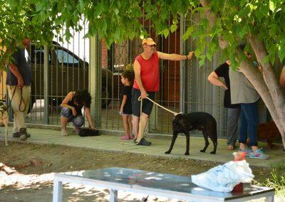 Operativo Mascotas Argentinas en conjunto con Zoonosis